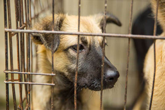 Photo of a street dog in a cage